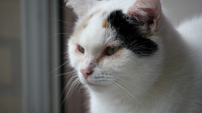 Chouffe kijkt uit het raam