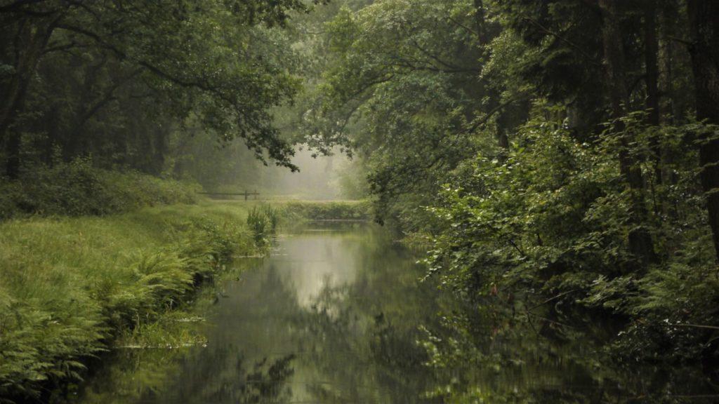 Colenbrandersbos landschapsfotografie