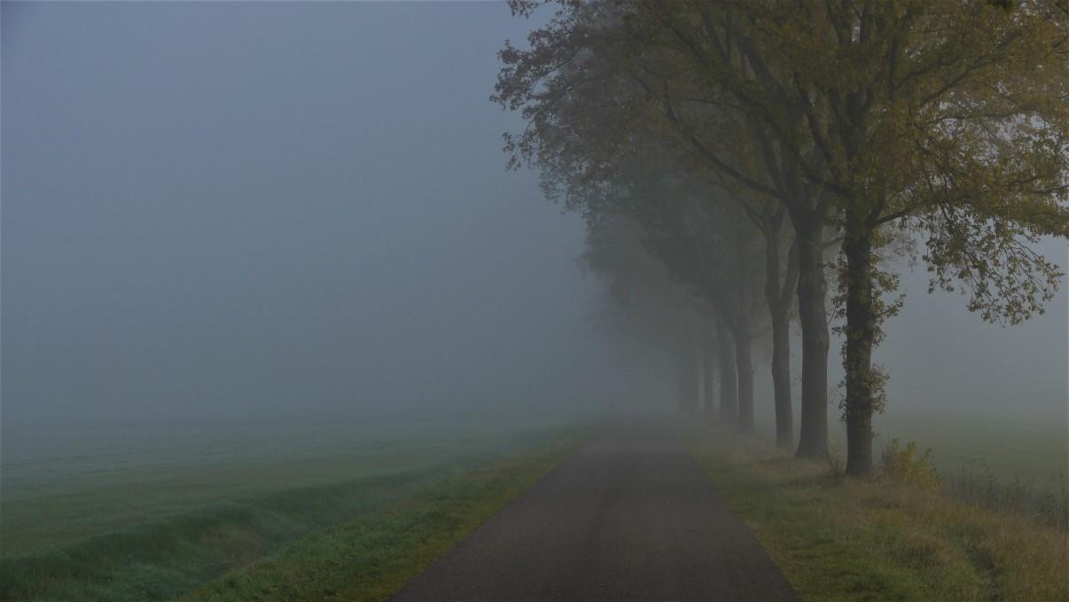 Landschapsfotografie mist