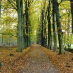 Bomenlaan op landgoed Molecaten - 2016