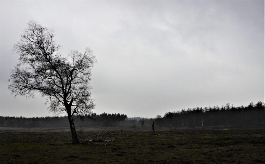 Kleurloze foto in de regen eerste blog van 2019