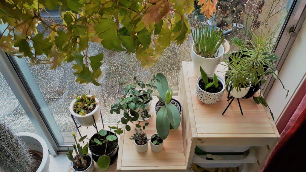 Planten en groene vingers