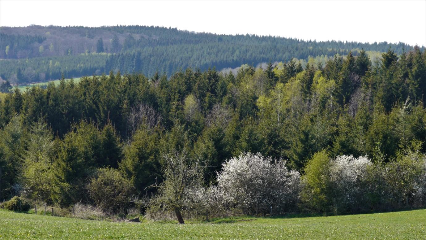 De heuvels rondom Anlier