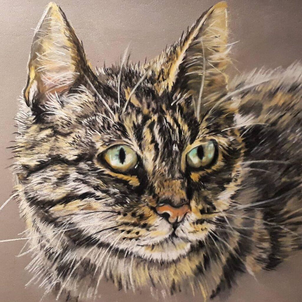 Ik maak veel tekeningen met pastelpotlood. Vooral huisdieren zijn daar geschikt voor, zoals deze kater.