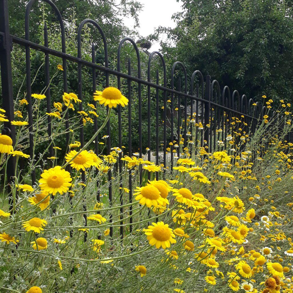 Bloemen bij een hek in Herwijnen